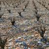 Guter Wein beginnt im Anbau