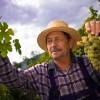 Traditionelle Weinherstellung