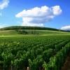 Weinbau in Kalifornien – Die Geschichte