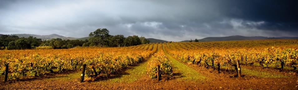 Ursprung des Weinbaus in Südafrika
